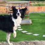 Dog Park Picture